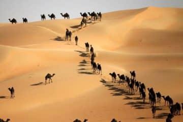 Liwa Desert Safari | VooTours